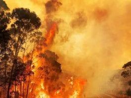 Mt Wilson Australia Bushfires luppo23