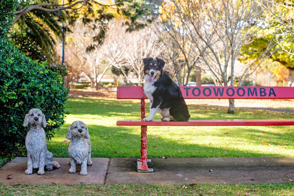 Dong on bench with dog statues