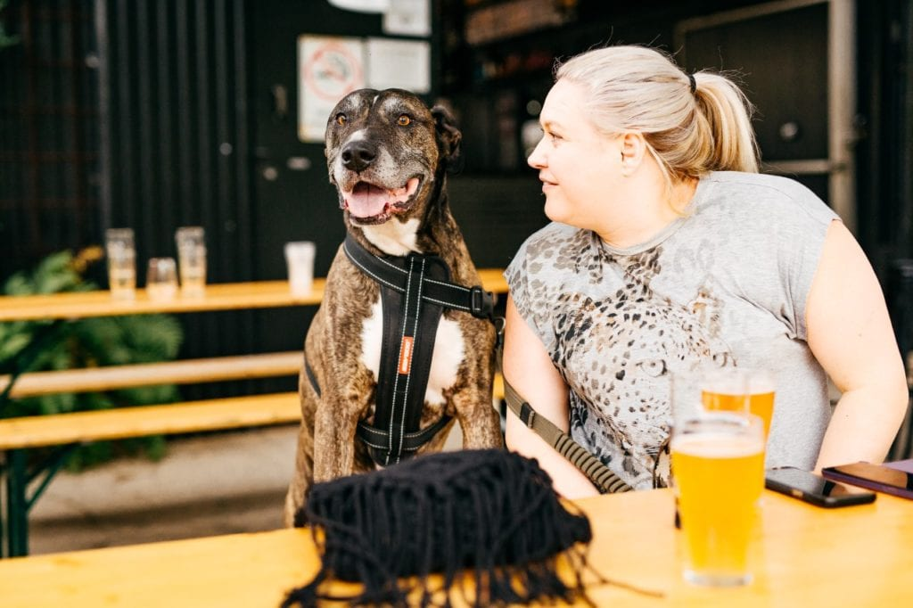 All Inn Brewing Co Dog