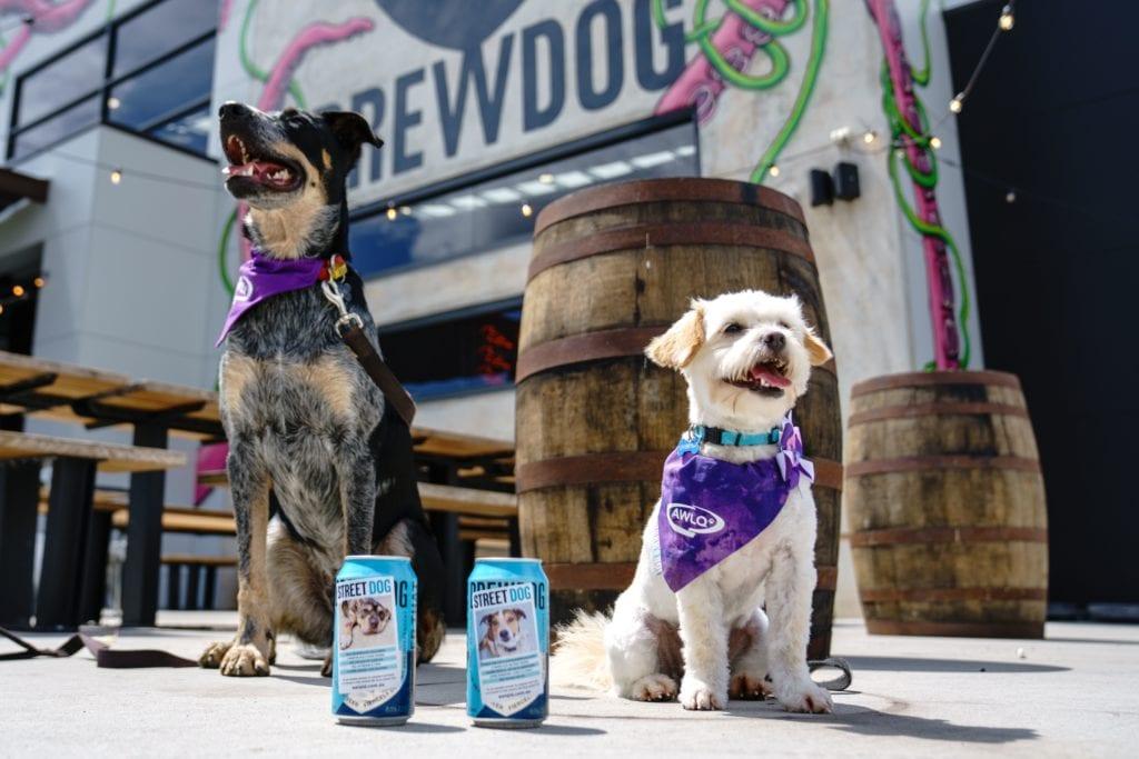 Brewdog Dogtap Dogs