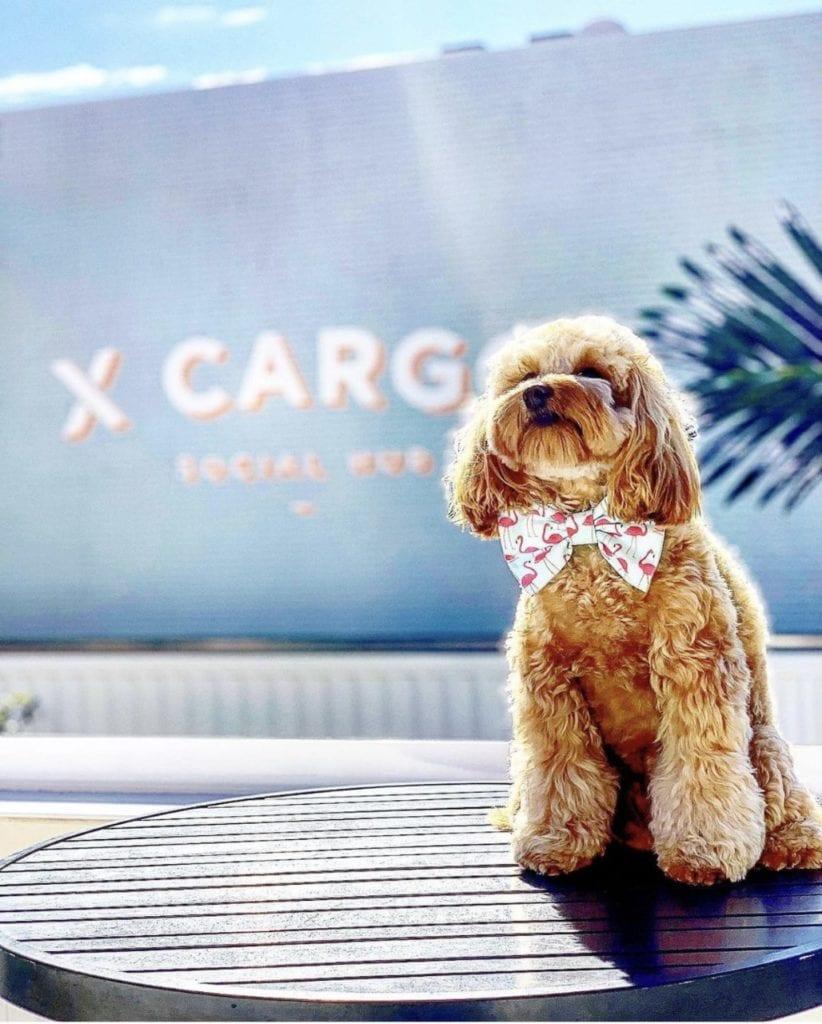 XCARGO dog